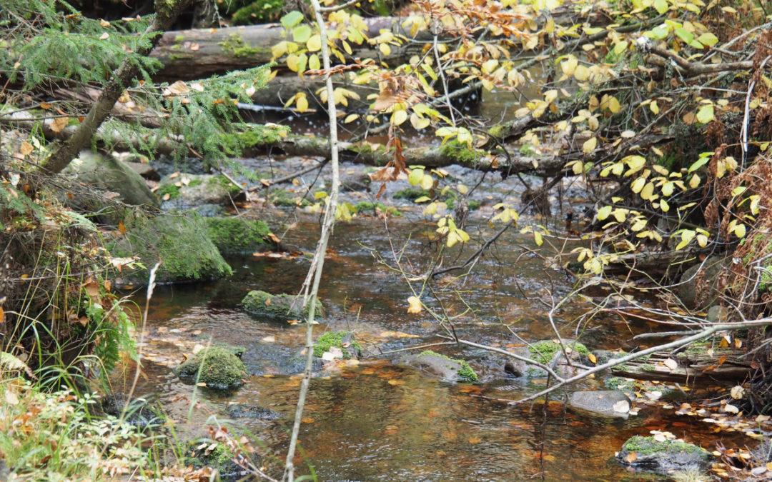 Kalliopuron luonnonsuojelualue & Purola